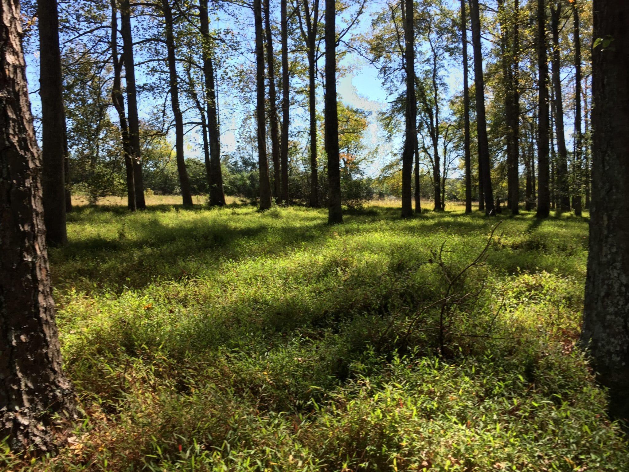Cauley Creek Woods
