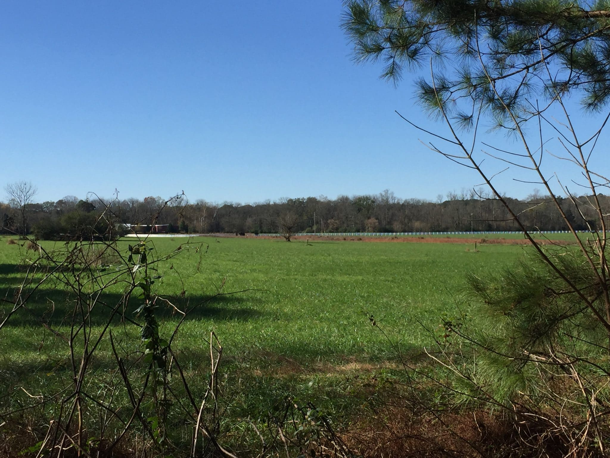 Cauley Creek Field